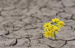 Image result for Resiliency